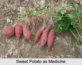 Use of Sweet Potato as Medicines, Classification of Medicine