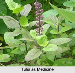 Use of Tulsi as Medicines, Classification of Medicine