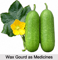 Use of Wax Gourd as Medicines, Classification of Medicine