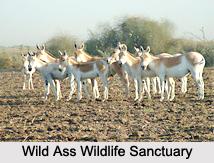 Wild Ass Wildlife Sanctuary