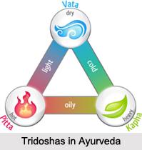 Ayurvedic Diet for Doshas