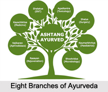Branches of Ayurveda