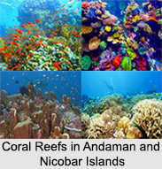 Coral Reefs in Andaman and Nicobar Islands