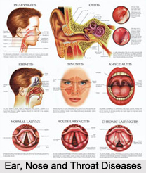 Ear, Nose and Throat Diseases
