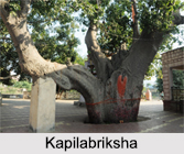 Mythological Forests in India