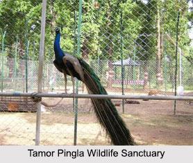Tamor Pingla Wildlife Sanctuary, Surajpur District, Chhattisgarh