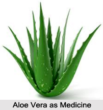 Use of Aloe Vera as Medicines, Classification of Medicine