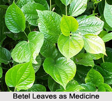 Use of Betel Leaves as Medicines, Classification of Medicine