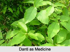 Use of Danti as Medicines, Classification of Medicine