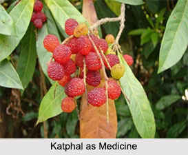 Use of Katphal as Medicines, Classification of Medicine