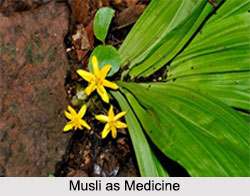 Use of Musli as Medicines, Classification of Medicine
