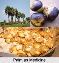Use of Palm as Medicines, Classification of Medicine