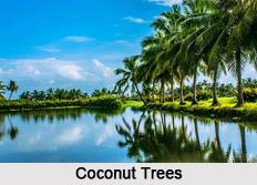 Coastal Trees in India