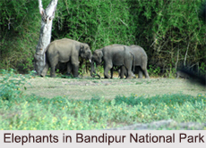 National Parks of Karnataka