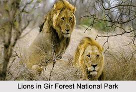 National Parks of Gujarat