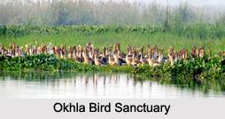 Bird Sanctuaries of Uttar Pradesh