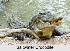 Indian Crocodiles