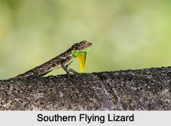 Indian Lizards, Reptiles
