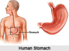 Stomach Ailments, Naturopathy