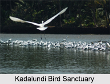 Bird Sanctuaries in Kerala