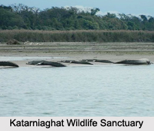 Wildlife Sanctuaries of Uttar Pradesh