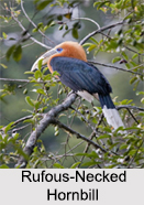Indian Hornbills, Indian birds