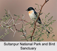 Bird Sanctuaries of Haryana