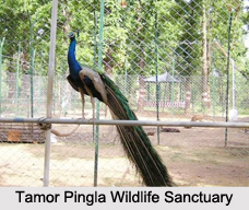 Wildlife Sanctuaries of Central India