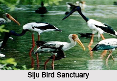 Bird Sanctuary of Meghalaya