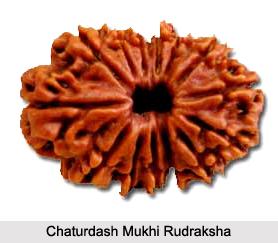 Chaturdash Mukhi Rudraksha