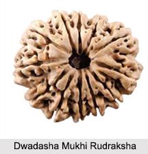 Dwadasha Mukhi Rudraksha