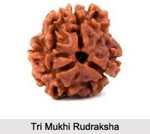Tri Mukhi Rudraksha