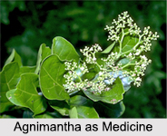Use of Agnimantha as Medicines, Classification of Medicine