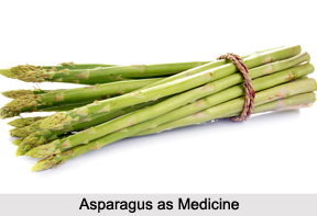 Use of Asparagus as Medicines, Classification of Medicine