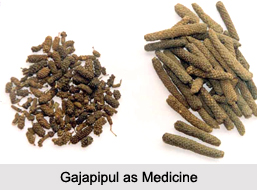 Use of Gajapipul as Medicines, Classification of Medicine