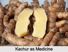 Use of Kachur as Medicines, Classification of Medicine