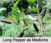 Use of Long Pepper as Medicines, Classification of Medicine