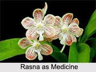 Use of Rasna as Medicines, Classification of Medicine