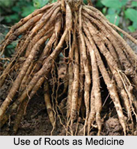 Use of Roots as Medicine