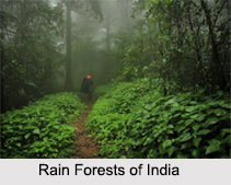 Rain Forests of India
