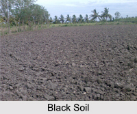 Types of Soils in India, Indian Soil