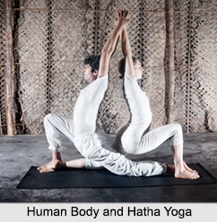 Human Body and Hatha Yoga