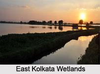 Indian Wetlands