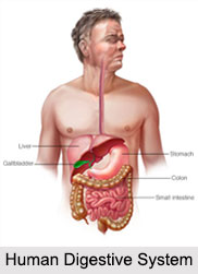 Indigestion, Stomach Ailment