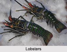 Indian Crustaceans