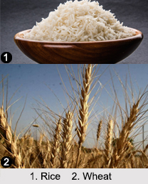 Indian Food Crops, Indian Vegetation