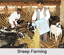 different types of animal husbandry in india