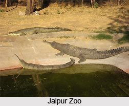 Zoos of Northern India
