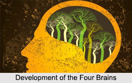 Development of the Four Brains, Kundalini Yoga