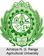 Universities of Andhra Pradesh, Indian Universities